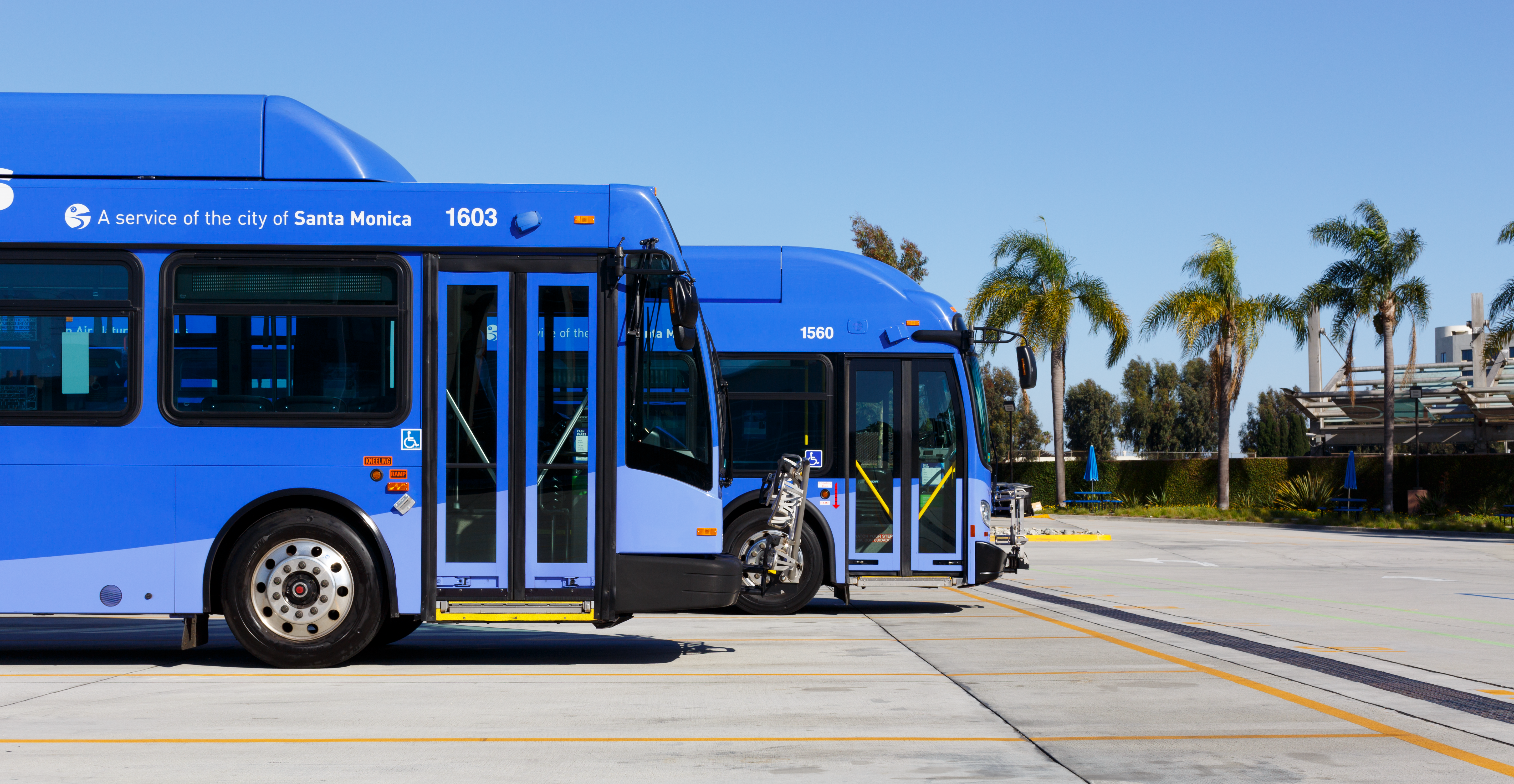 our buses - big blue bus